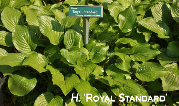 Hosta Plant Growth Rate Characteristics From Hosta Helper By