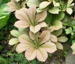 Perennials Companion Plants For Hostas From The Hosta Helper