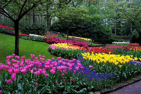 Keukenhof netherlands gardens parks squares and open for Jardines de keukenhof