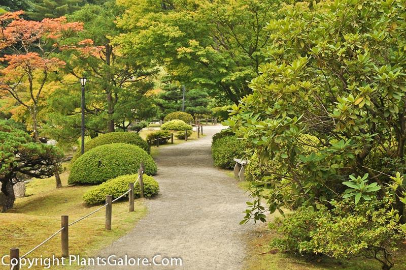 University Of Washington Japanese Garden Usa Gardens Parks Squares And Open Spaces