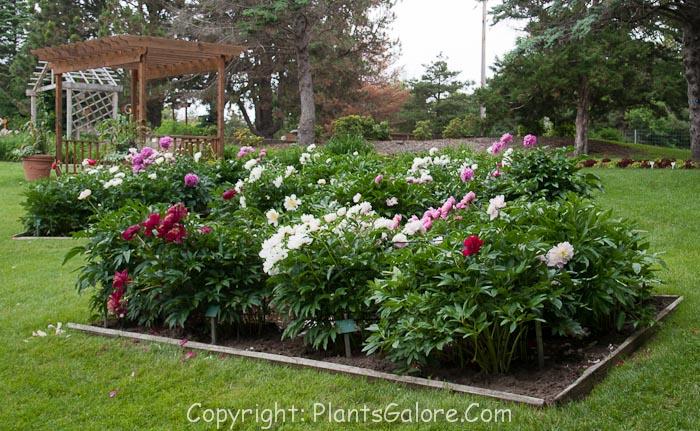 Dubuque Arboretum and Botanical Garden - USA - Gardens, Parks ...