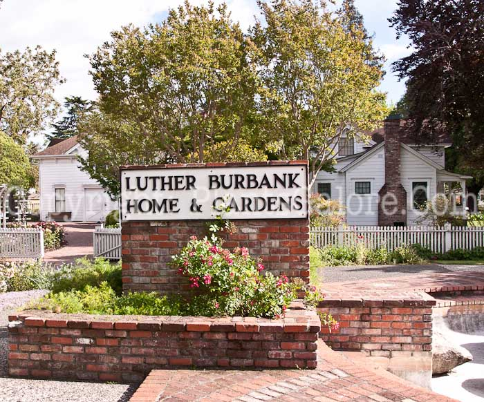 Luther Burbank House And Garden   USA   Gardens, Parks, Squares And Open  Spaces   Presented By PlantsGalore.Com