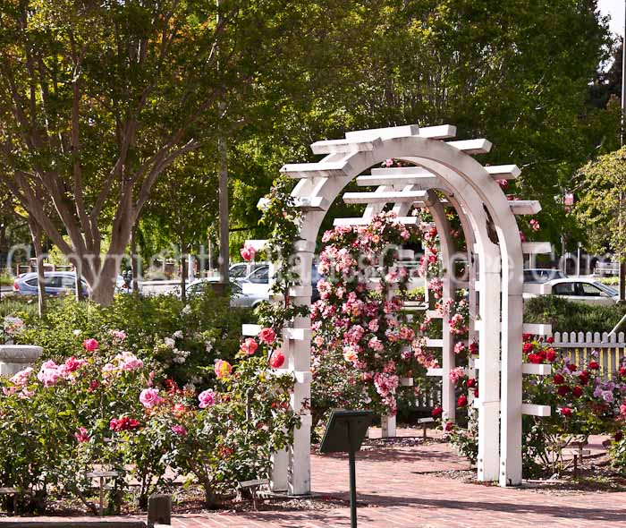 Santa rosa california over 50 dating service