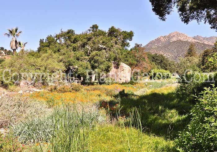 santa barbara botanic garden usa gardens parks squares and open spaces presented by plantsgalorecom - Santa Barbara Botanic Garden