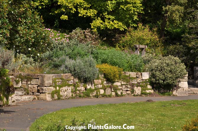 Strybing Arboretum Usa Gardens Parks Squares And